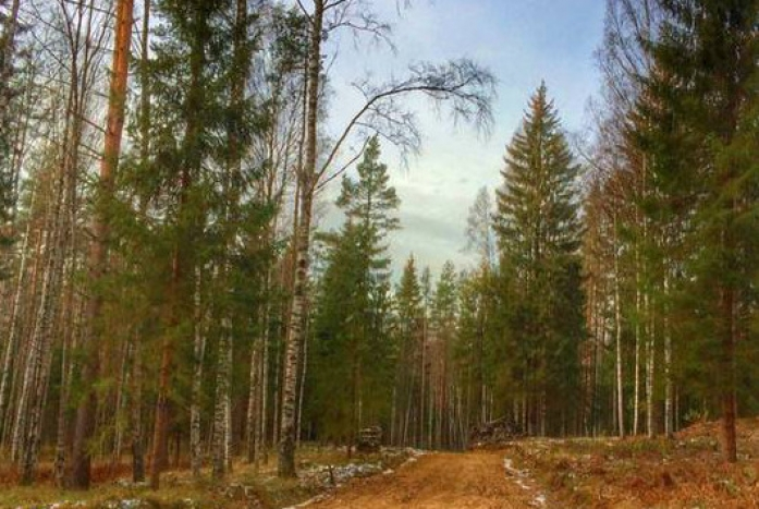 Лесной хутор